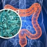 microflora intestinale nutrizionista lucia salerno
